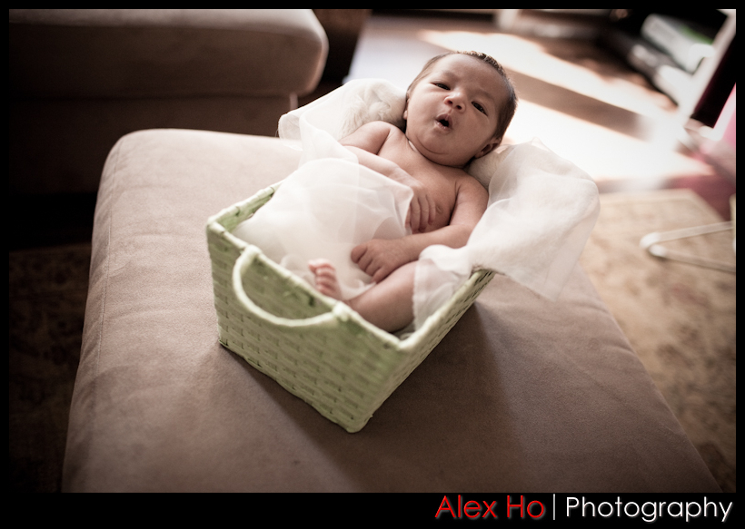newborn baby infant photography in a basket