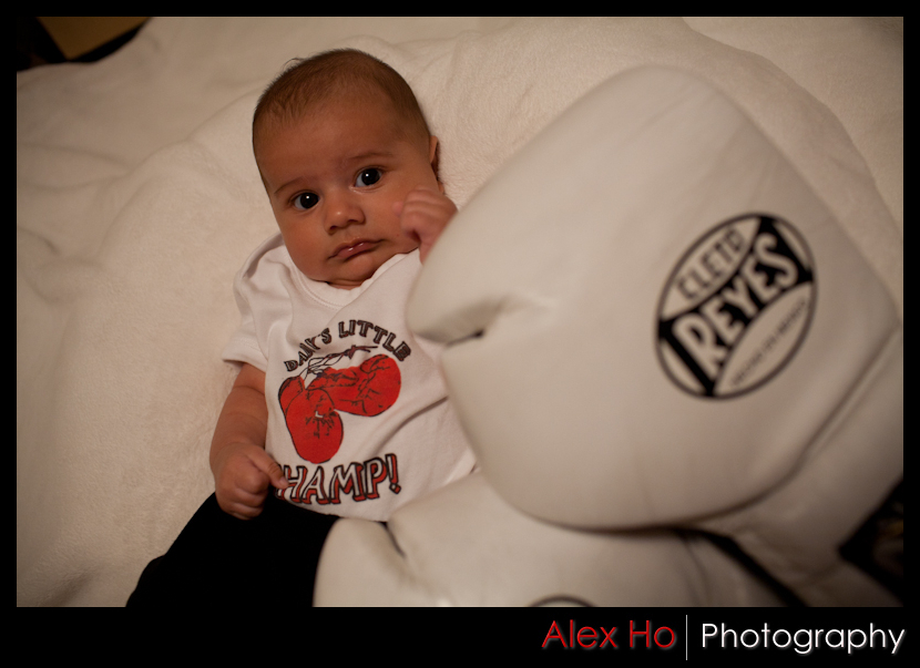 baby boy portraits boxing gloves