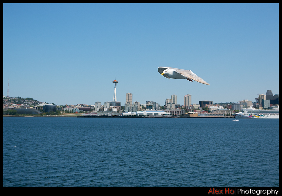 seagull Highlights from Seattle and Vancouver
