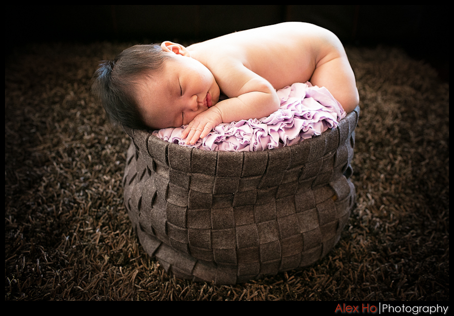 baby basket portraits