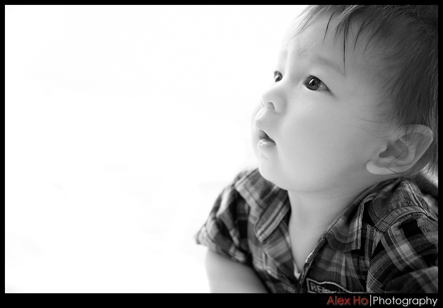 six month old baby boy portraits