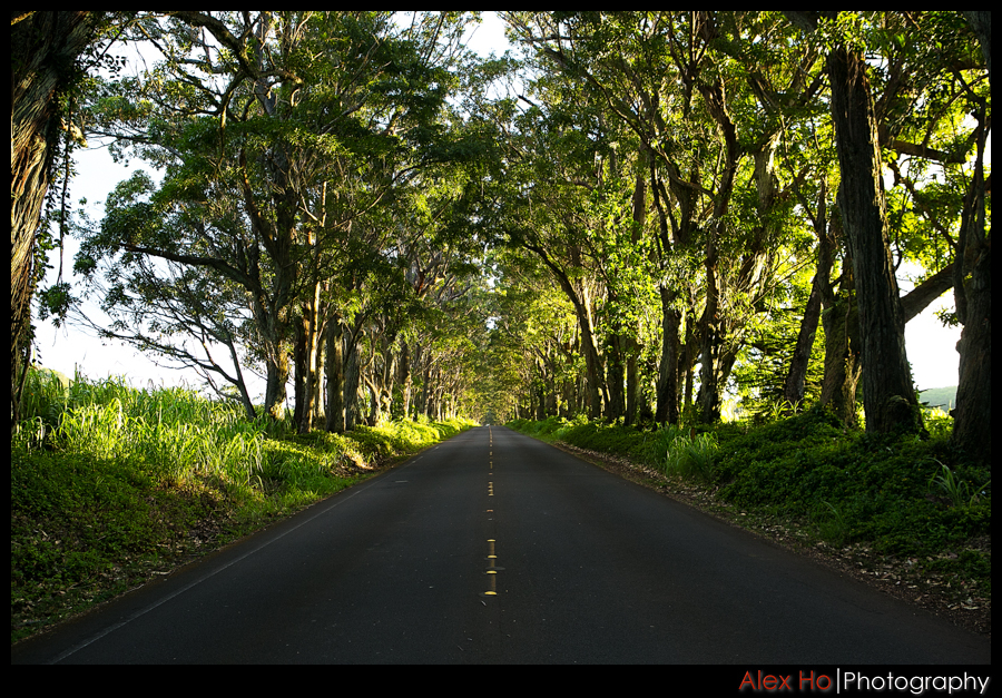 kauai tree tunnel road