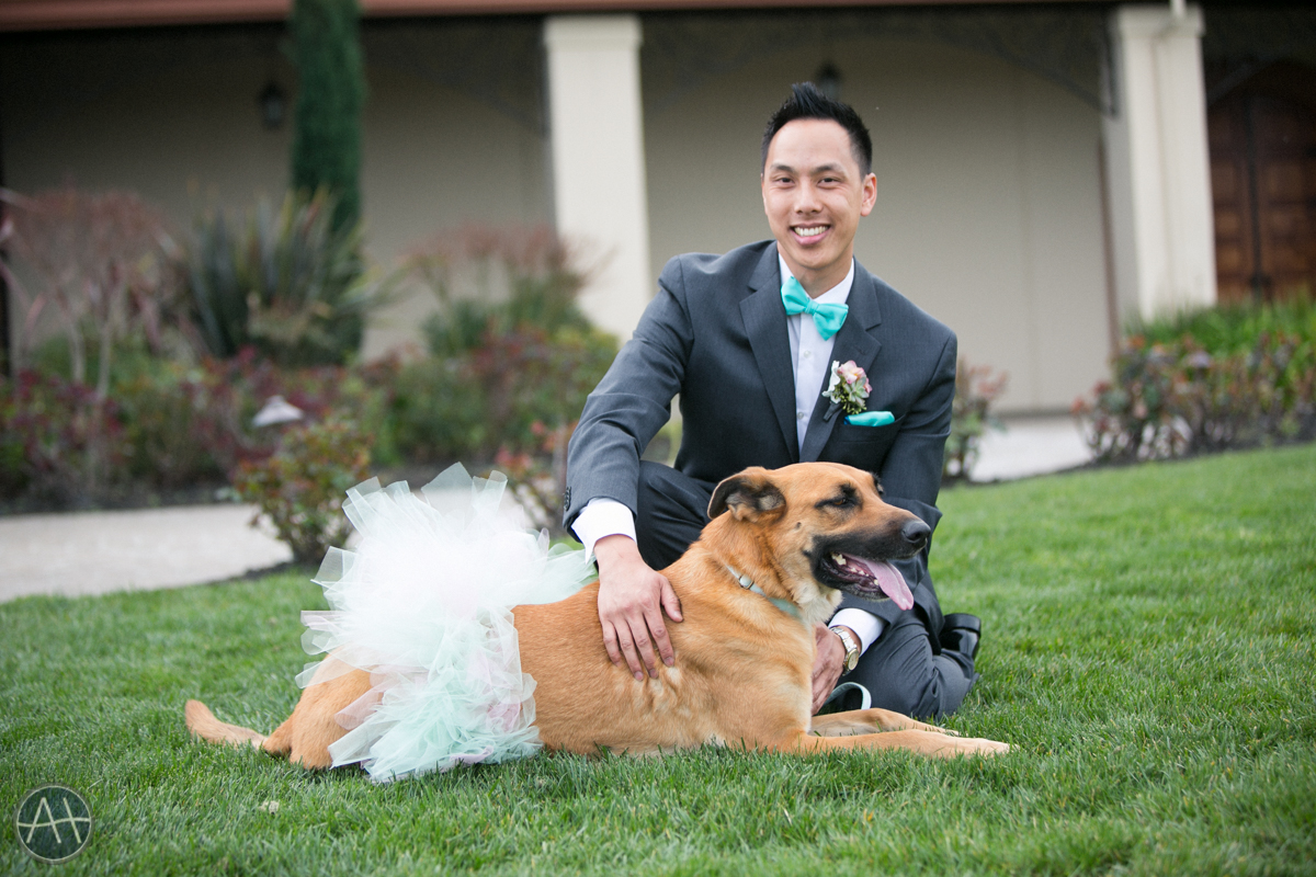 wedding with doggy