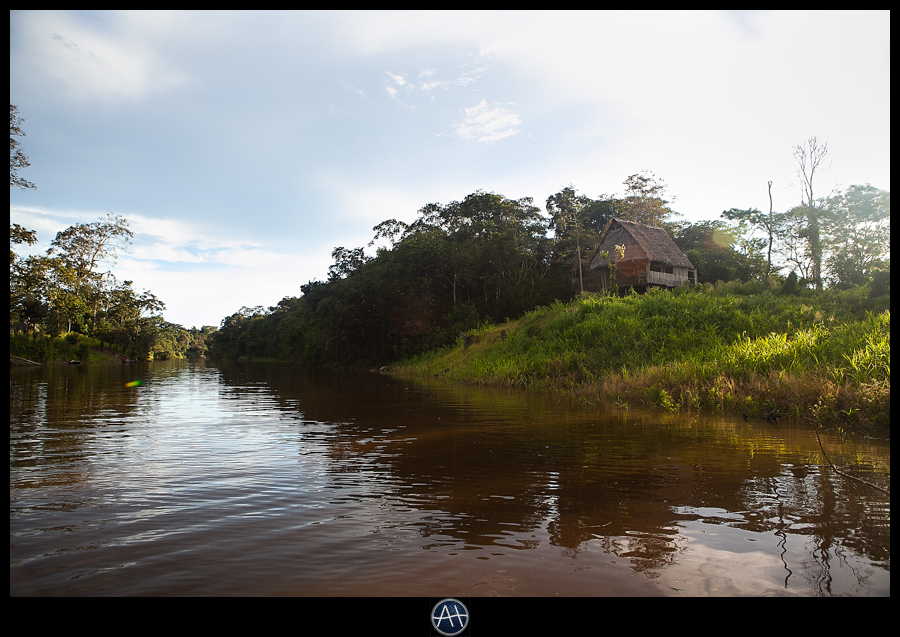 amazon jungle river morning