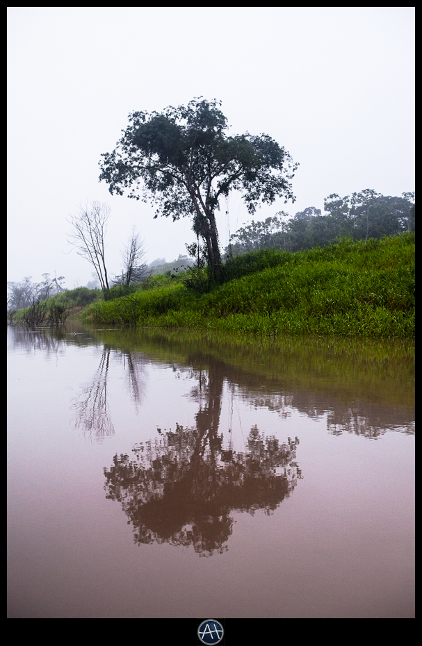 amazon jungle river tree reflection