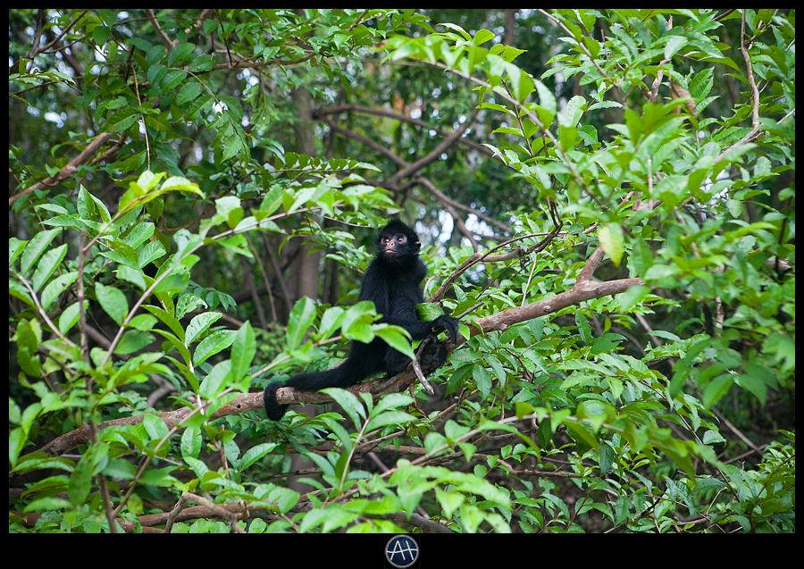 amazon jungle wild monkey